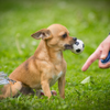 Jessica FitzGerald Dog Training profile image